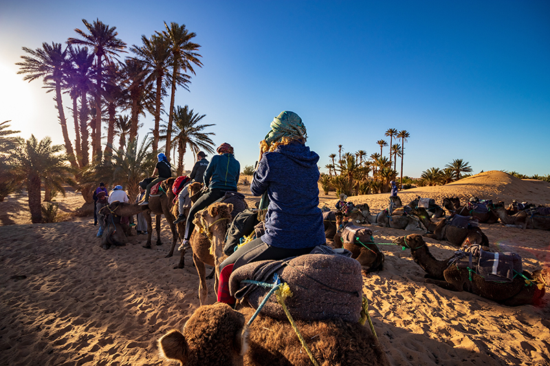 People riding camels in the Sahara Desert